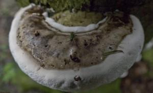 Reconnaitre les champignons